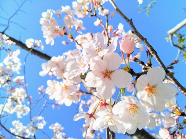 桜花賞2020のサインはヤマニンシュクル?